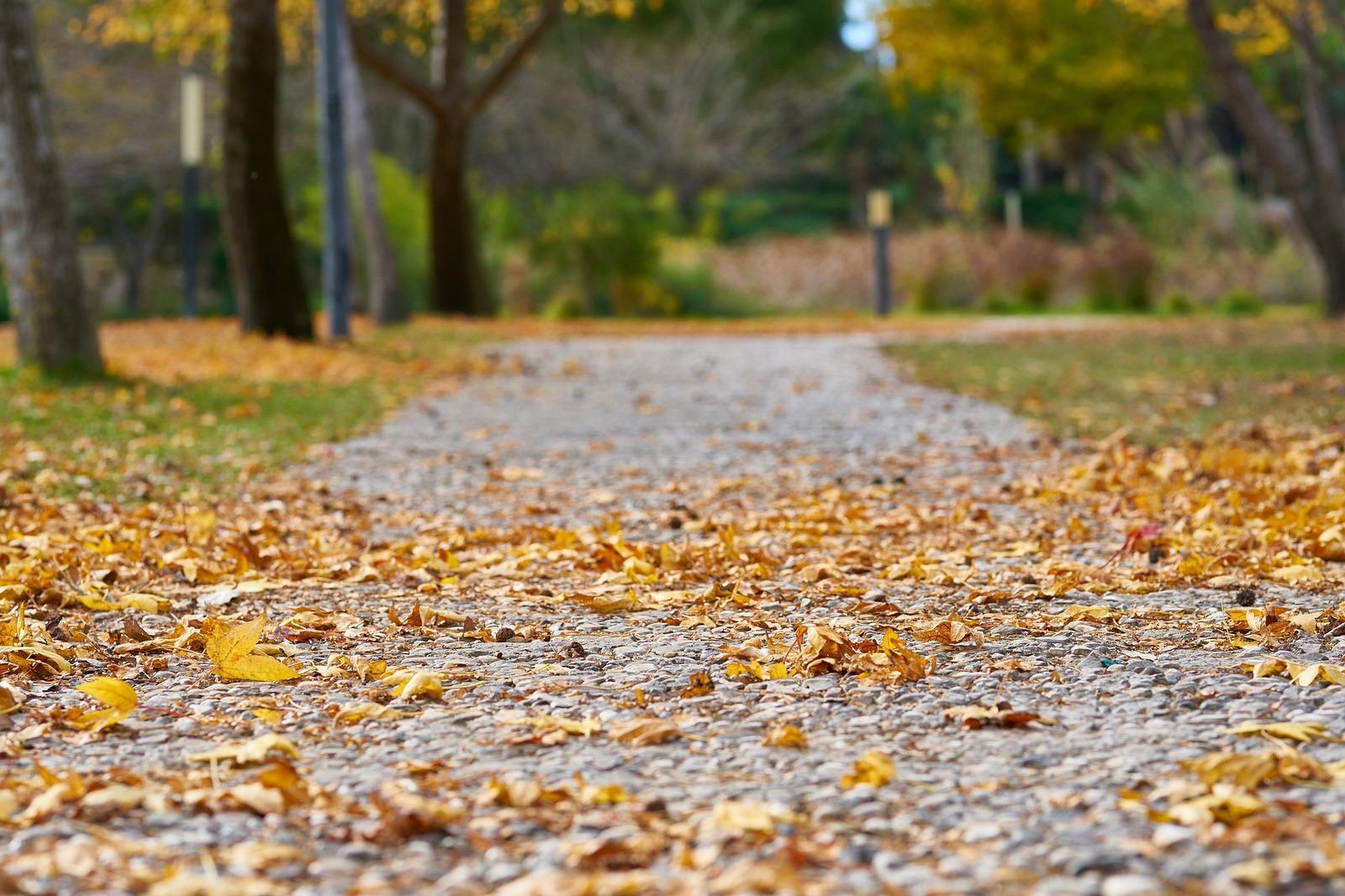 Gemeente start met veranderingen in openbaar groen