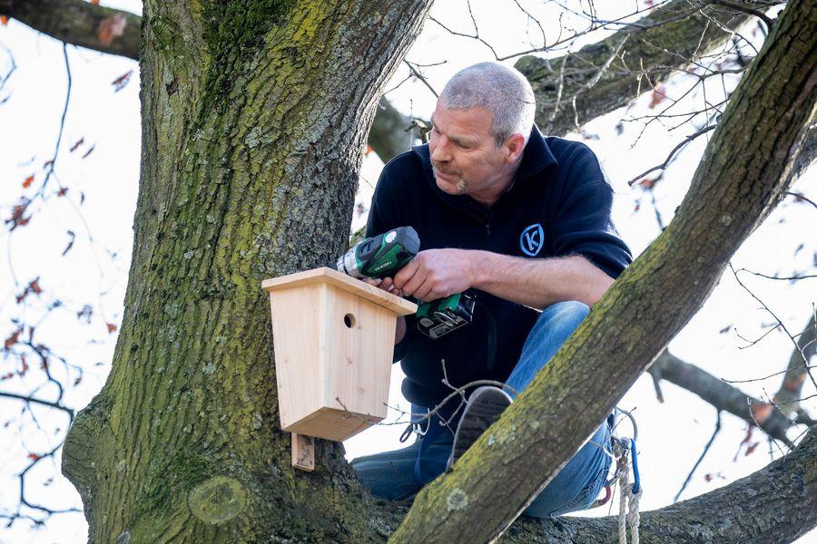 Mezenkastjes van hout uit eigen gemeente als wapen tegen eikenprocessierups