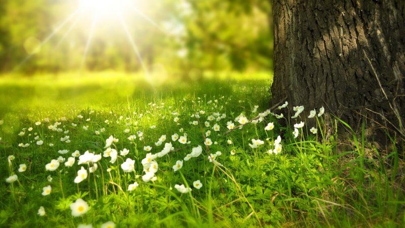 Gemeente nodigt inwoners en ondernemers uit samen te werken aan 'Natuur voor Elkaar'